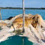 Benarkah Legenda Gajah Mina Terdampar Di Laut Natuna Utara Kini Nyata