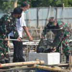 Berhasil, TNI AL Panen Ikan Kerapu di Tambak Masyarakat Binaan