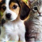 Kementan: Dua Hewan Ini Belum Terbukti Menulakan Virus Covid 19